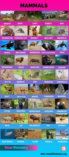 Animal Species, Bird Species, Reptiles And Amphibians, Mammals, Kangaroo Rat, Names Of Birds, Vertebrates And Invertebrates, Spectacled Bear, Visual Dictionary