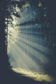 Light & Trees: