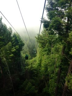Crescent city, California  Tram up into the giant redwoods...loved it!
