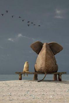 Juntos, los dos animales que más admiro! Y adoro contemplar!