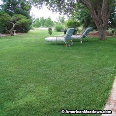 This low-growing, low-maintenance grass seed mixture is perfect for your lawn. The soft, green grass is extremely durable and tolerates high traffic, making it great for play areas.