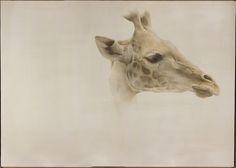 Marzio Tamer, Giraffe, watercolour, cm 109 x 154