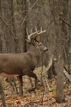 What a beauty! Whitetail Buck