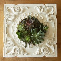 succulent garden/wall in ornate framed planter <3 at { https://www.facebook.com/pages/4th-Ave-Gardens/475906652488415 }