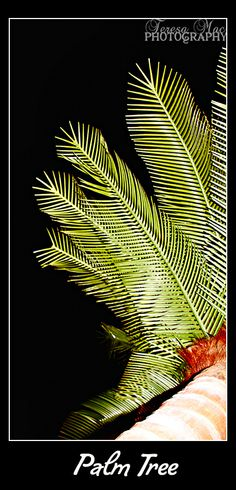 Palm on Promenade Deck Carnival Breeze, Palm, Deck, Abstract, Artwork, Art Work, Work Of Art, Auguste Rodin Artwork, Front Porches