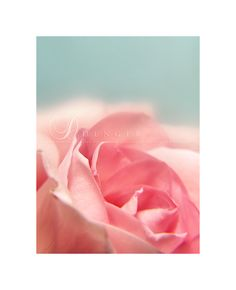 Roses are Pink... by ~onixa on deviantART