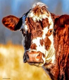 Farm Animals, Funny Animals, Cute Animals, Cow Pictures, Pretty Pictures, Cow Tales, Whatever Forever, Bull Cow, Baby Cows