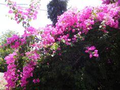 Flowers in Tel Aviv, Israel
