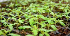 Paradis, Home And Garden, Organic, Gardening, Design, Landscaping, Home, Farmhouse, Green