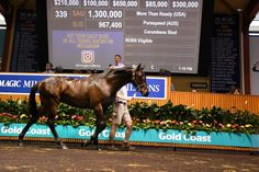 Waterhouse buys full-brother to Sebring for $1.3 million at Magic Millions : Industry Horse Breeding and Racing news updated daily, www.thoroughbrednews.com.au
