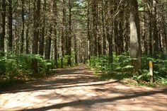 Pog Lake Algonquin Park Ontario Canada Algonquin Park, Forests, Ontario, Country Roads, Canada, American, Plants, Summer, Summer Time