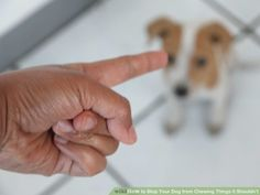 Breaking The Chew Habit.   http://www.wikihow.com/Stop-Your-Dog-from-Chewing-Things-it-Shouldn't