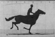 Eadweard Muybridge's documented the forward notion of how a horse runs proving that horses have all four hooves off the ground. Who knew that?:   - Wikipedia, the free encyclopedia