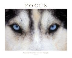Focus - Concentration Is The Secret Of Strength Photographic Print