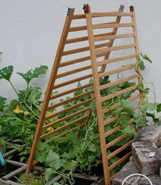 Garden trellis upcycled from old crib.