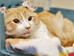 """Injured Freeway Cat Gets Forever Home With Man Who Saved Him 