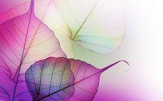 Transparent mauve leave veins #1