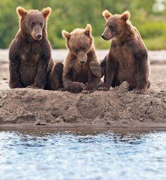 Three Little Bears.