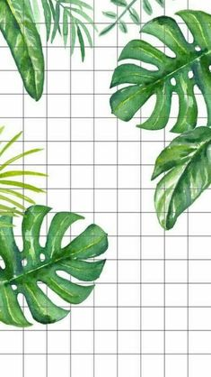 Greenery with gridlines Leaves Wallpaper Iphone, Grid Wallpaper, Iphone Wallpaper Vsco, Plant Wallpaper, Tropical Wallpaper, Homescreen Wallpaper, Cute Wallpaper Backgrounds, Pretty Wallpapers, Tumblr Wallpaper