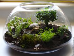 Tiny Terrarium Garden