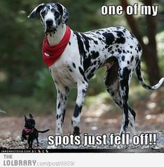 Here's dog memes! Funny dog memes that every dog owner will understand. Meet some very good Animal Jokes, Funny Animal Memes, Dog Memes, Cute Funny Animals, Funny Cute, Funny Dogs, Dog Humor, Funny Memes, 9gag Funny