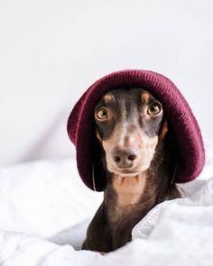 If you need a daily dose of cuteness, visit Nudli's instagram page and check her supermodel photos.  Ebbe a nagy szélben felkapok egy sapit, hogy ne fújja szét a füleim 😄 A ti fületek, hogy viseli a szeles időt? 🌬️ Repked minden irányba vagy meg se moccan? 🤔 Minden, Instagram Feed, Bucket Hat, Neon, Hats, Bob, Hat, Neon Colors, Hipster Hat