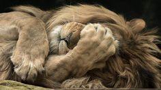 Nouvel article publié sur le site littéraire Plume de Poète - Quelques cris .....Lion les écrit ....   -    ILEF SMAOUI -