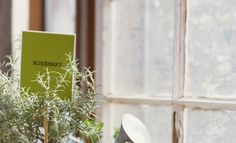 Your Comprehensive Guide to Growing and Caring for Rosemary Plants