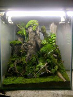 Vivarium with moss Gecko Terrarium, Aquarium Terrarium, Moss Terrarium, Garden Terrarium, Planted Aquarium, Gecko Vivarium, Reptiles, Lizards, Reptile Enclosure
