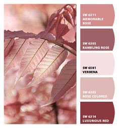 Paint colors from Chip It! by Sherwin-Williams Paint colors from Chip It! by Sherwin-Williams Pink Paint Colors, Interior Paint Colors, Paint Colors For Home, House Colors, Red Colour Palette, Color Palate, Colour Schemes, Color Combos, Pantone