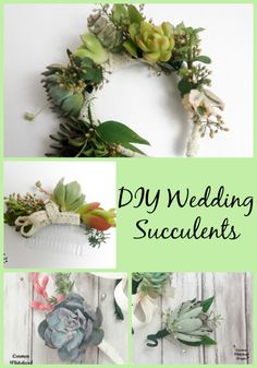 DIY Wedding Succulents - Carmen Whitehead Designs