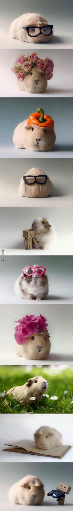 piggies with things on their heads! Having a bad day? These floofs will help you…