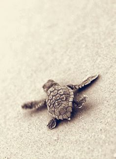 Interested in ecotourism? Releasing baby turtles in Cancun is a great way to start and a fun adventure for kids of all ages! Learn how you can get involved.
