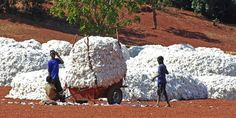 VF Corporation to use 100% sustainably grown #cotton in future.