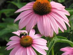 These plants and flowers call the Midwest their home. Learn how to add these native beauties to your garden with planting and growing advice from HGTV Gardens.