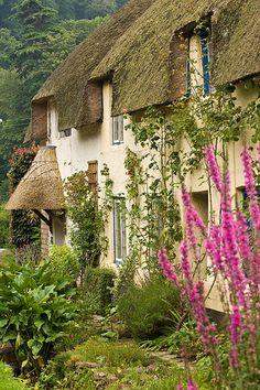 Cottage Garden, Dunster, Somerset