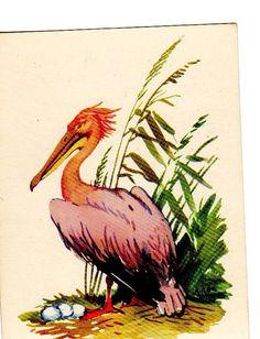Vintage postcard Rose Pelican artist AM by sharonfostervintage, $5.00