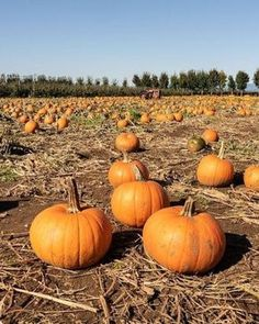 This guide to San Diego in the fall includes the best fall events in San Diego and 10 of the best things to do in San Diego in fall. Get a taste of fall in San Diego with this list of the best fall activities in San Diego California. | best things to do in san diego in the fall | san diego pumpkin patch | pumpkin patches in san diego | san diego things to do in fall | san diego in the fall | san diego fall activities San Diego Activities, San Diego Events, San Diego Travel, Autumn Activities, Travel Guides, The Good Place, Things To Do, Places To Go, Pumpkin