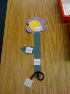 Plant life cycle. Crafts and song idea (head, shoulders, knees and toes tune: flower, stem, leaves, and roots)