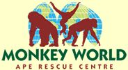 Monkey World Ape Rescue Centre Dorset UK supports gov'ts around world in stopping illegal primate trade from the wild. At the Centre refugees of this illegal trade and those who have suffered abuse/neglect are rehabilitated into natural living gioups Dorset Holiday, Cotswold Wildlife Park, Vertebrates And Invertebrates, Monkey World, Chimpanzee, Baby Orangutan, Orangutans, Zoo Park