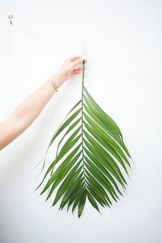 How to Decorate with Palm Leaves: Hang them Up