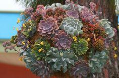 hanging succulent basket | Flickr - Photo Sharing!