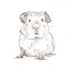 Hey, I found this really awesome Etsy listing at https://www.etsy.com/uk/listing/267202430/guinea-pig-chum-pencil-drawingpet