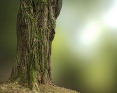 Black Locust Tree, Matthias Patscheider on ArtStation at https://www.artstation.com/artwork/yXNKJ