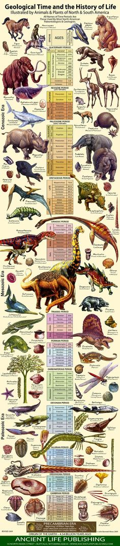 Geological Time and the History of Life - Never before has the latest geological information been so beautifully presented … an excellent way to get everybody excited about geology and paleontology! Earth Science, Science And Nature, Life Science, Extinct Animals, Prehistoric Creatures, History Facts, Natural History, Ancient History, Fun Facts
