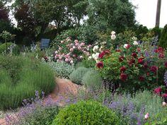 Rosengarten - Wohnen und Garten Foto