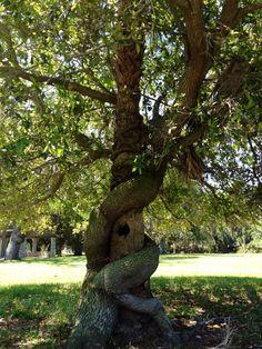 Tree love, Cumberland Island