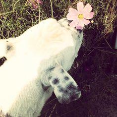 stop and smell the flowers Dinosaur Stuffed Animal, Outdoor Decor, Flowers, Animals, Instagram, Animales, Animaux, Animal, Animais