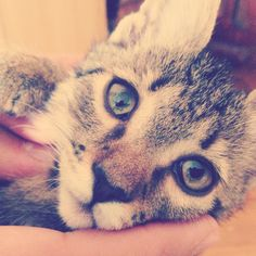 I wish my eyes could take photos. My Eyes, Cats, Photos, Animals, Gatos, Pictures, Animales, Animaux, Animal