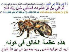 سبحان الله Miracles Of Islam, Islamic Information, Prayer Times, Words Worth, Quotes By Famous People, Holy Quran, Arabic Quotes, Allah, Me Quotes